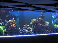 Установлена интерактивная стена в г. Ялта