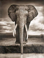 """Набор алмазной вышивки (мозаики) """"Слон. Мудрость"""""""