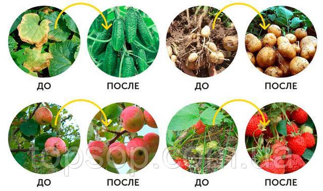 BIOGROW - биоудобрение для огорода и сада