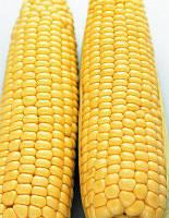 Семена кукурузы Кредит