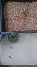 Масло льяное 500мл холодного віджиму. олія лляна. лляна олія, фото 3