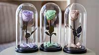 Живая роза в стеклянной колбе разные цвета