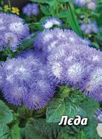 Семена агератума Леда, 2 гр., двухцветный