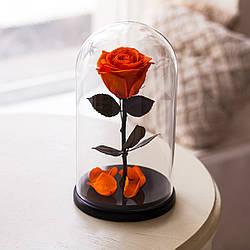 Живая роза в стеклянной колбе Огненный янтарь