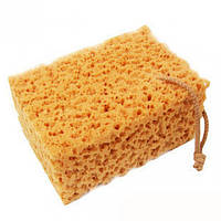 Коралловая губка для мытья больших поверхностей