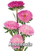 Семена астры Аполлония,  5 гр., серебряно-розовая