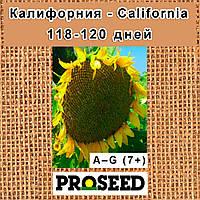 Семена подсолнечника Калифорния - California