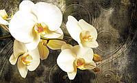 Фотообои 3D цветы 368x254 см Белые орхидеи (2948P8)