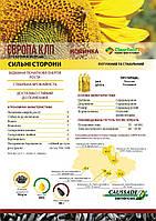 Семена подсолнечника гибрид Европа КЛП