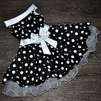 """Нарядное  платье в горох для девочки """"Стиляги""""., фото 1"""