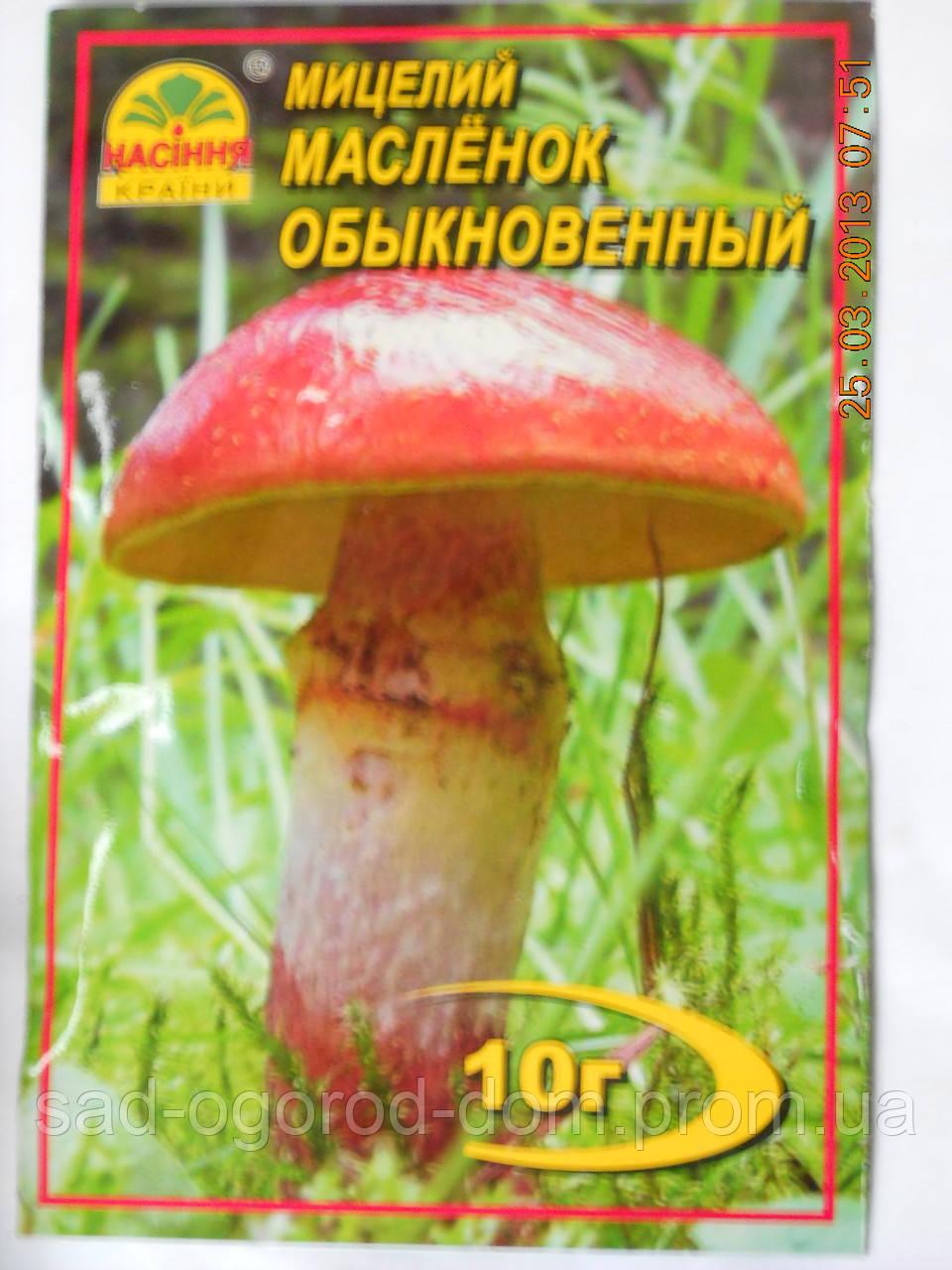 Мицелий Масленка Обыкновенного
