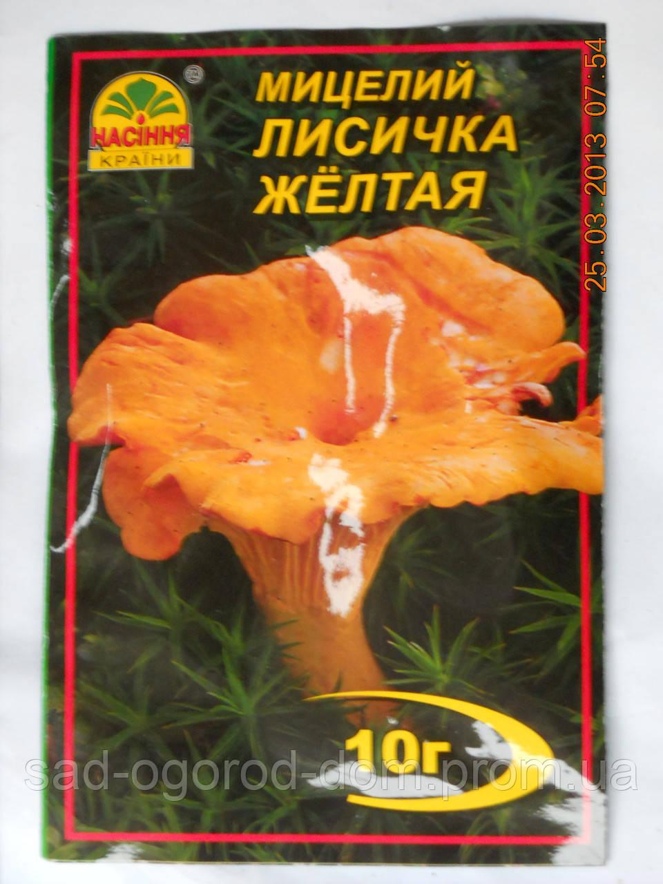Мицелий Лисички Желтой