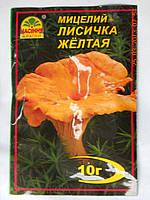 Лисичка Желтая