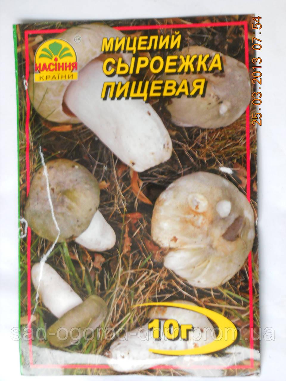Мицелий Сыроежки Пищевой