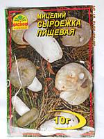 Мицелий Сыроежки Пищевой, фото 1