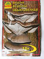 Мицелий Вешенки Обыкновенной, фото 1