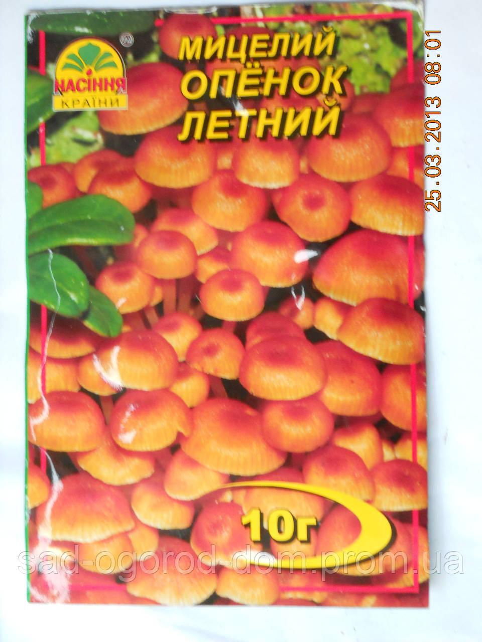 Мицелий Опенка летнего