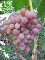 Виноград Розовый персиковый