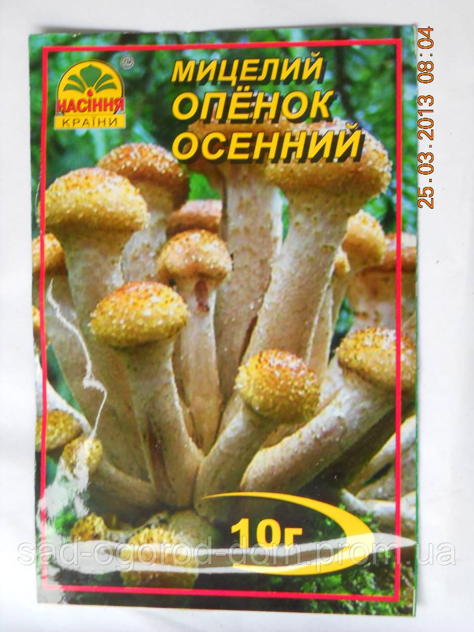 Мицелий Опенка осеннего