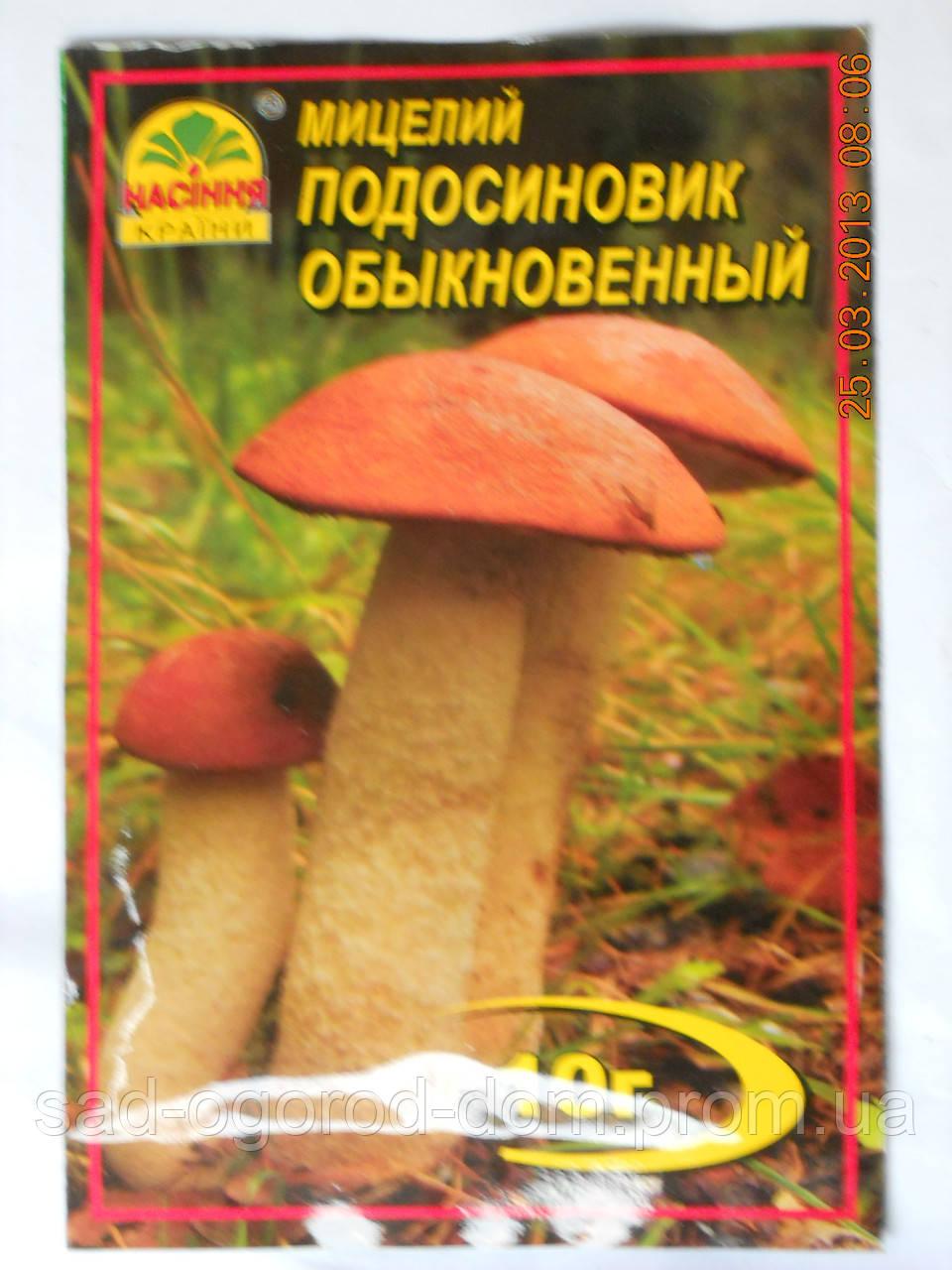 Мицелий Подосиновика обыкновенного