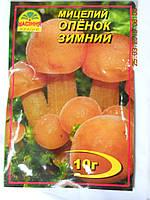 Мицелий Опенка зимнего, фото 1