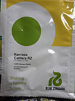 Насіння огірка Кантара F1 / Cantara (12‒306) RZ F1 (1000 н)
