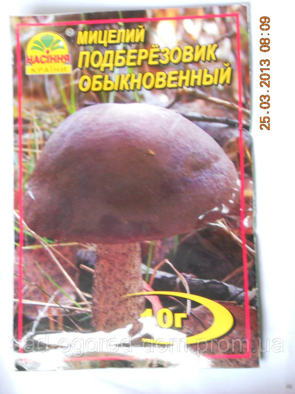 Мицелий Подберезовика обыкновенного