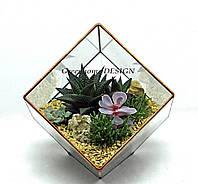 """Флорариум """"Куб-мини"""" с суккулентами, ширина -20 см, высота -18 см."""