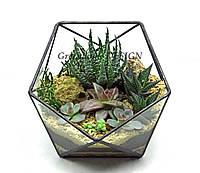 """Флорариум """"Икосаэдр-мини"""" с живыми неприхотливыми растениями (суккулентами)-оригинальный подарок!"""