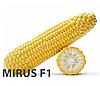 МирусF1 (MirusF1) 5тис.  Кукурудза цукрова суперсолодка