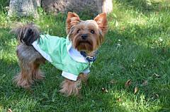 Жилет-курточка Сильвер (Код: О 351) с капюшоном предлагается для малых и средних пород собак. Выполняется из переливающейся плащевой ткани в точечку + плюшевая подкладка.