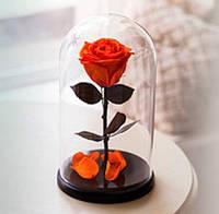 Живая роза Долговечная роза в колбе, лучший подарок