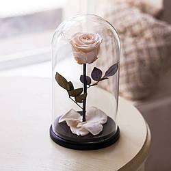 Живая роза в стеклянной колбе, разные цвета, лучший подарок