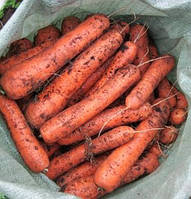 Дордонь F1 - семена моркови, Syngenta - 100 000 семян (1.6-1.8)