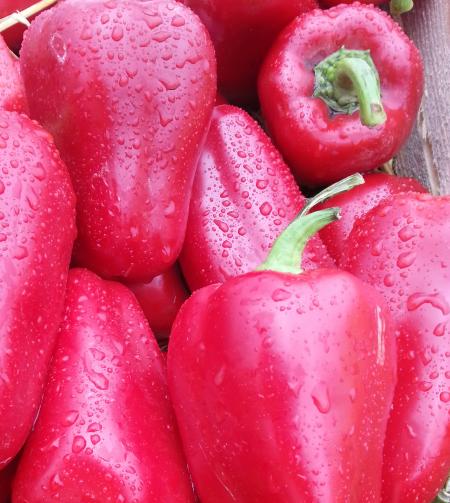 Проф семена сладкого перца раннего гибрид Любов F1, Syngenta профупаковка 500 семян, для открытого грунта