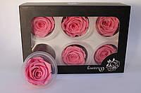 Стабилизированные (вечные) розы: 5.5-6.5 см.