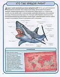 Акули і скати. Міні-енциклопедія, фото 4