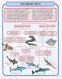 Акули і скати. Міні-енциклопедія, фото 5