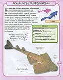 Акули і скати. Міні-енциклопедія, фото 7