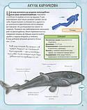 Акули і скати. Міні-енциклопедія, фото 9