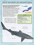 Акули і скати. Міні-енциклопедія, фото 10