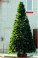 Высотная искусственная елка, каркасная, пленка ПВХ 3.5 м.