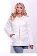 Куртки, пальто из плащевки, ветровки XL+
