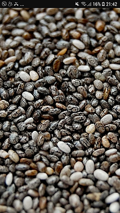 Семена Чиа микрозелень, фото 2