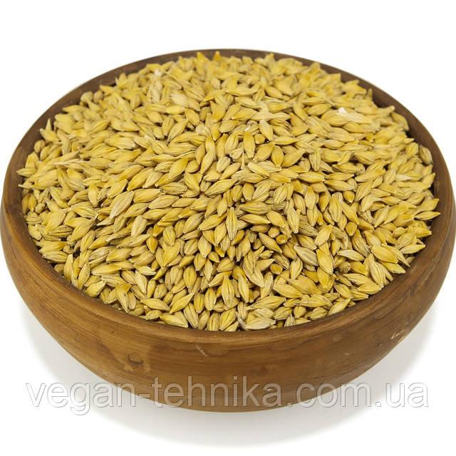 Ячмень, семена ячменя, зерно