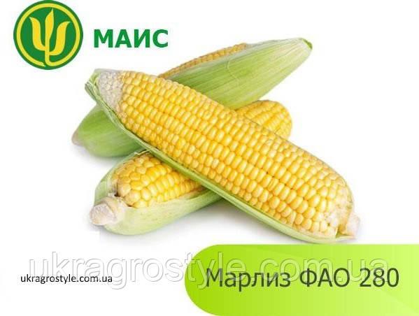 Семена кукурузы Марлиз (ФАО 280)