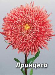 Семена астры Принцесса, 5 гр., лососево-розовая