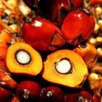 Пальмоядровое масло 500 гр
