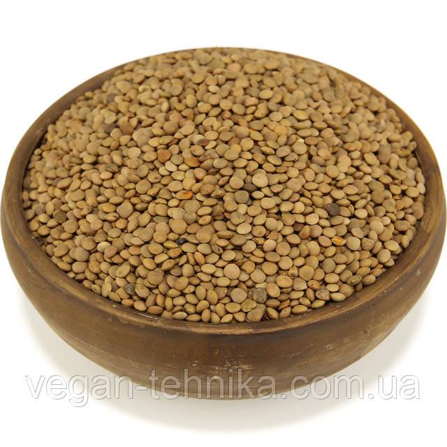 Чечевица красная, семена чечевицы
