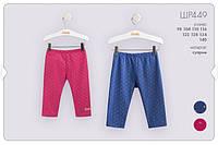Трикотажные шорты-лосины для девочки. ШР 449